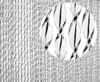 Türvorhang SARA, 100% PVC, 60x190cm, schwarz